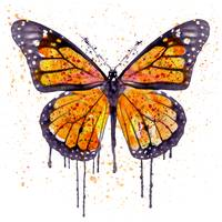 Monarch Butterfly Watercolor