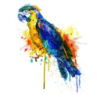 Parrot Watercolor