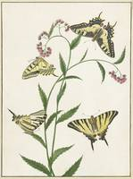 Four Butterflies on Flowers, Paulus Knogh, 1747 -