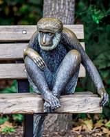 Monkey on a Bench