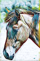 Horse Animal Art Print 4 - Rogue Art Prints