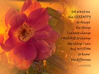 Serenity Prayer Orange Pink Rose