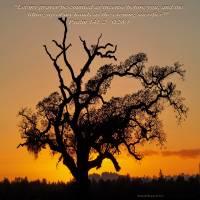 Oak Sunset (2) by Richard Thomas