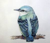 BLUE NUTHATCH 5X5