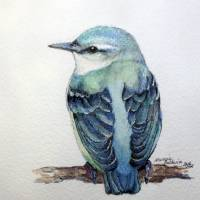 BLUE NUTHATCH 5X5  by Marcia Baldwin