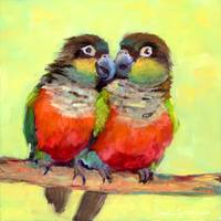 #3 Crimson-bellied Conure