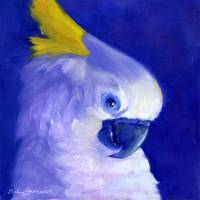 #4 Sulphur Crested Cockatoo