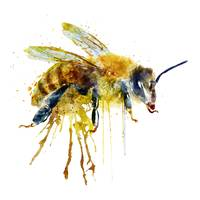 Watercolor Bee