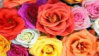 flower-wallpaper-for-windows-xp