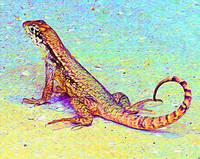 Painted Palm Beach Lizard