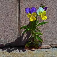 The violet plant growing on concrete