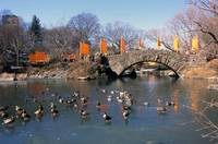 Christo's Gates in Central Park