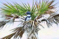 King Fisher Palm