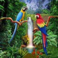 MACAW TROPICAL PARROTS WIDENED