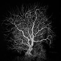 Hand Drawn Ink Tree Branches Black & White Print