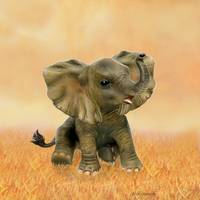 BEAUTIFUL AFRICAN BABY ELEPHANT