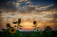 August in Ohio by Jim Crotty