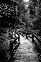 Bridge at Conkle's Hollow in Black and White