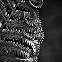 Fern Patterns in Black and White by Jim Crotty by Jim Crotty