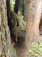DSCF0261 Redwood Trees