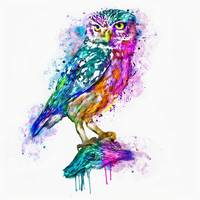 Colorful Owl