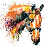 Colorful Horse Head