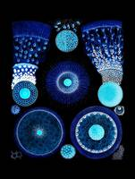 Brilliant Blue Radiolaria