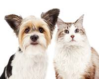 Cute Dog and Cat Closeup