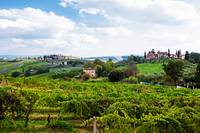 Vineyard in San Gimignano Italy