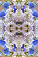 Delphinium Kaleidoscope Flower Abstract