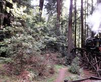 DSCF0256 steam train in redwood forest