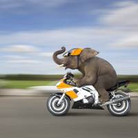 ElephantOnMotorcycle Art Prints & Posters by Stephanie Roeser