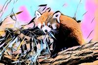 Red Panda Pop Art