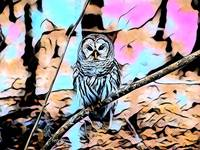 Owl Pop Art Comic