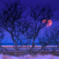 Snow Moon Art Prints & Posters by Dapixara Art