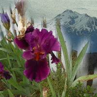 Mountain Flowers Art Prints & Posters by Faye Cummings