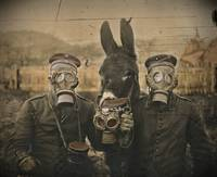 German Solders Donkey in Gas Masks WWI