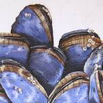 """Mussels II"" by cathysavels"