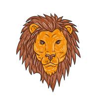 Male Lion Big Cat Head Drawing