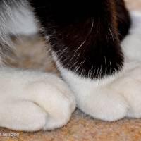 Furry white paws Art Prints & Posters by Simone van Bergen