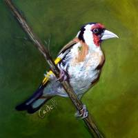 goldfinch Art Prints & Posters by Anna Castelli