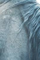 Horse mane, fine art print n°1, for animal lover