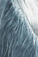 Horse mane, fine art print n°2, animal lovers