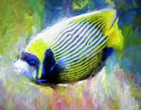 Tropical emperor fish
