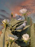 Doves and Peruvian Apple Cactus