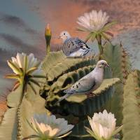 Doves and Peruvian Apple Cactus Art Prints & Posters by I.M. Spadecaller