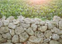 Field, green, food, Italy, sunset, landscape, wall