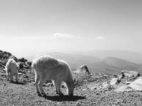 Mountain Goats, Colorado Film