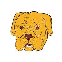 Bordeaux Dog Head Cartoon
