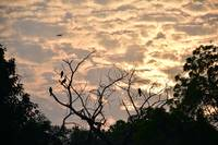 A Lovely Sunset With Tree & Birds